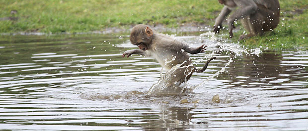Monkeys at Longleat. Photo by Ian Turner