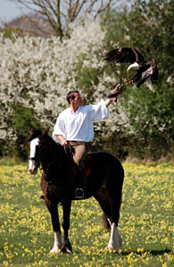 Longleat Falconer Jimmy Robinson on his horse Murphy with bald eagle