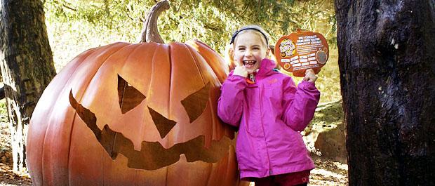 Longleat's Giant Pumpkin Trail banner